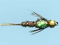 pheasant tail flash goudkop