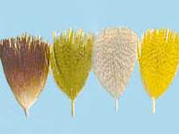 2g FLANC de CANARD montage mouche OLIVE truite colvert